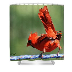 Cardinal-a Picture Is Worth A Thousand Words Shower Curtain