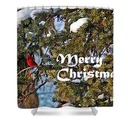 Cardinal Christmas Card Shower Curtain by Aimee L Maher Photography and Art Visit ALMGallerydotcom