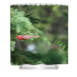 Shower Curtain featuring the photograph Cardinal In Flight by Thomas Woolworth