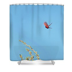Cardinal In Full Flight Digital Art Shower Curtain by Thomas Woolworth