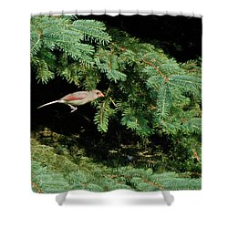 Shower Curtain featuring the photograph Cardinal Just A Hop Away by Thomas Woolworth