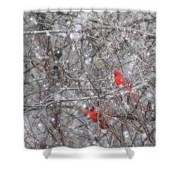 Cardinals In The Snow Shower Curtain by Rick Friedle