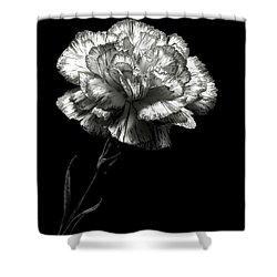 Carnation In Black And White Shower Curtain