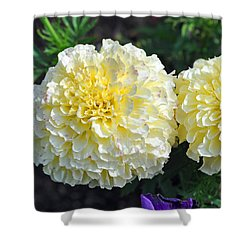Shower Curtain featuring the photograph Carnations by Tikvah's Hope