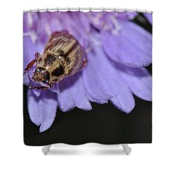 Carpet Beetle On Stokes Aster Shower Curtain