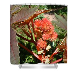 Castor Shower Curtain by Mark Robbins