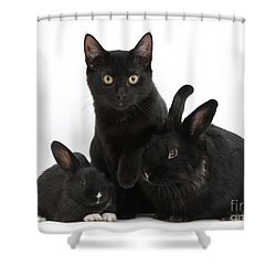 Cat And Rabbits Shower Curtain by Mark Taylor