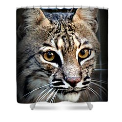 Cat Fever Shower Curtain by Kathy  White