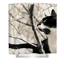Cat In A Tree In Black And White Shower Curtain