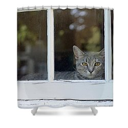 Cat In The Window Shower Curtain by Lisa Phillips