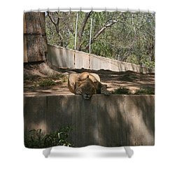 Shower Curtain featuring the photograph Cat Nap by Stacy C Bottoms