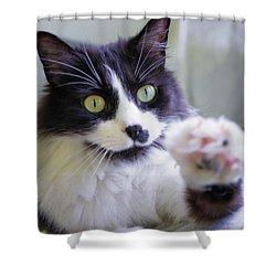 Cat Reaches For Camera Shower Curtain by Lori Coleman