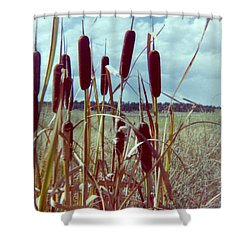 Shower Curtain featuring the photograph Cat Tails by Bonfire Photography
