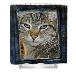 Cat Through A Tiny Window Shower Curtain by Mary Machare
