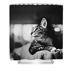 Cats Portrait Shower Curtain by Sumit Mehndiratta