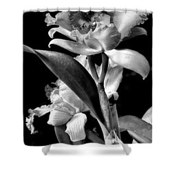 Cattleya - Bw Shower Curtain by Christopher Holmes