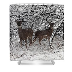 Shower Curtain featuring the photograph Caught In The Snow Storm by Elizabeth Winter
