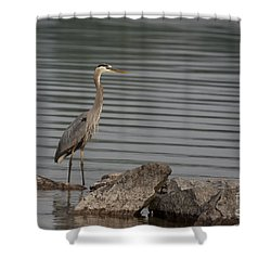 Cautious Shower Curtain by Eunice Gibb