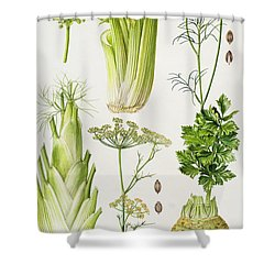 Celery - Fennel - Dill And Celeriac  Shower Curtain by Elizabeth Rice