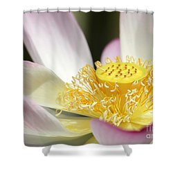 Center Of A Lotus Shower Curtain by Sabrina L Ryan