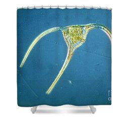 Ceratium Tripos Shower Curtain by Eric Grave