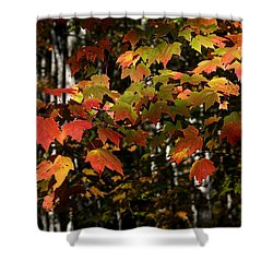 Changing Of The Colors Shower Curtain by Rich Franco