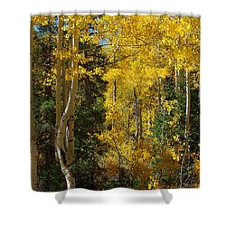 Shower Curtain featuring the photograph Changing Seasons by Vicki Pelham