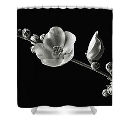 Shower Curtain featuring the photograph Chaparral Mallow In Black And White by Endre Balogh
