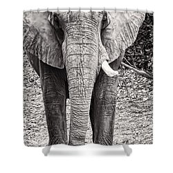 Shower Curtain featuring the photograph Charge by Traci Cottingham