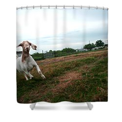 Shower Curtain featuring the photograph Chased By A Crazy Goat by Lon Casler Bixby