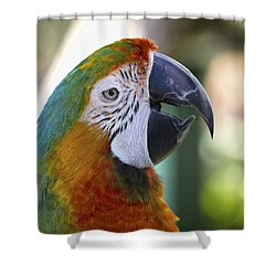 Shower Curtain featuring the photograph Chatty Macaw by Clare Bambers