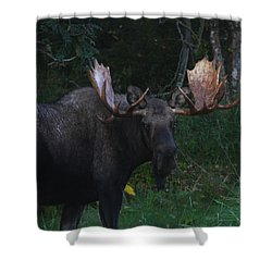 Shower Curtain featuring the photograph Checking You Out by Doug Lloyd