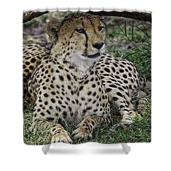 Cheetah Alert Shower Curtain