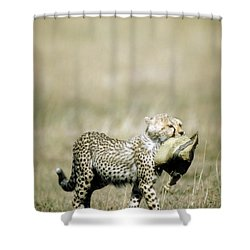 Cheetah Cub With Hat Shower Curtain by Greg Dimijian
