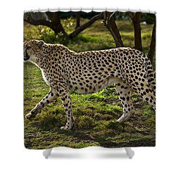 Cheetah  Shower Curtain by Garry Gay