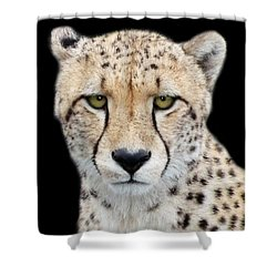 Shower Curtain featuring the photograph Cheetah by Lynn Bolt