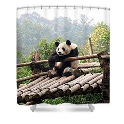 Chengdu Panda Shower Curtain by Carla Parris