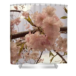 Shower Curtain featuring the photograph Cherry Blossom 2 by Andrea Anderegg