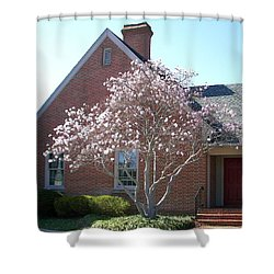 Shower Curtain featuring the photograph Cherry Blossom by Pamela Hyde Wilson