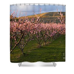 Cherry Blossom Pink Shower Curtain by Mike  Dawson