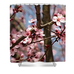 Cherry Blossoms Shower Curtain by Denise Keegan Frawley