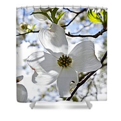 Cherry Blossoms I Shower Curtain by Glennis Siverson