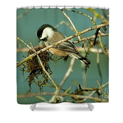 Chick-a-dee Shower Curtain by Rod Wiens