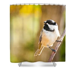 Chickadee Shower Curtain by Cheryl Baxter