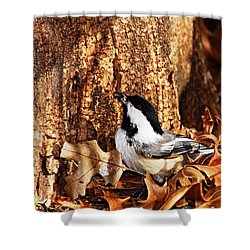 Chickadee With Sunflower Seed Shower Curtain by Larry Ricker
