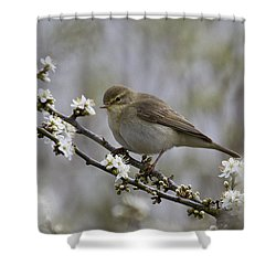 Chiff Chaff On Blackthorn Blossom Shower Curtain