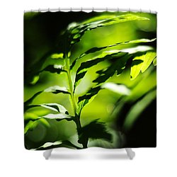 Child Of The Wind Shower Curtain by Rebecca Sherman