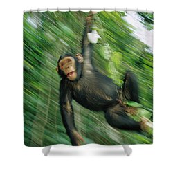 Chimpanzee Pan Troglodytes Juvenile Shower Curtain by Cyril Ruoso