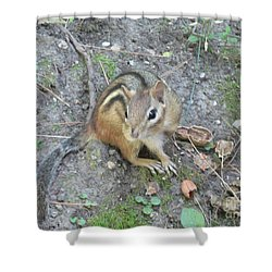 Shower Curtain featuring the photograph Chipmunk Feast by Laurel Best