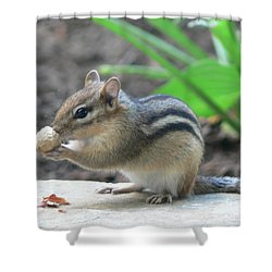 Shower Curtain featuring the photograph Chipmunk by Laurel Best